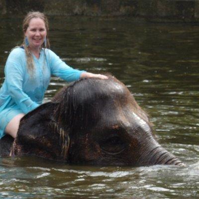 Twitter elephant image